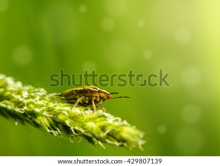 Bug on grass - stock photo