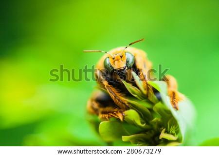 bug on green leaf - stock photo