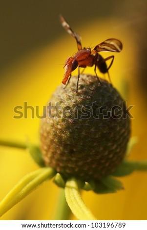 Bug on Yellow flower - stock photo