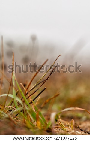 Bug's eye view of grass and twigs along a hiking trail. Selective focus close up on twigs in the foreground.  - stock photo
