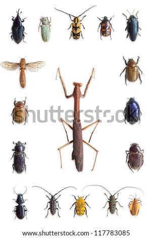 bugs - stock photo