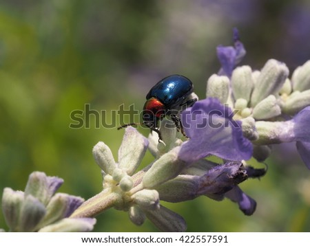Bugs and Insects - stock photo