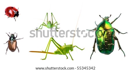 Bugs collection isolated on white background - stock photo