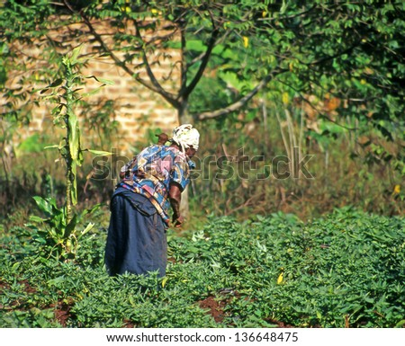 BUIKWE REGION, UGANDA - JULY 26: An unidentified farmer working on their fields on July 26, 2004 in Buikwe region, Uganda. People in rural areas of Uganda depend on farming. - stock photo