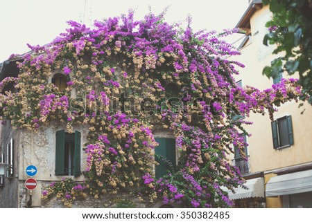 building covered in purple flowers - stock photo