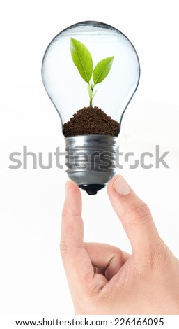 Bulb light with tree inside and hand on White background - stock photo