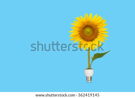 Bulb with beautiful sunflower on blue background,eco energy concept