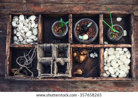 Bulbs and plant shoots and spring flowers in wooden box.View from the top. - stock photo