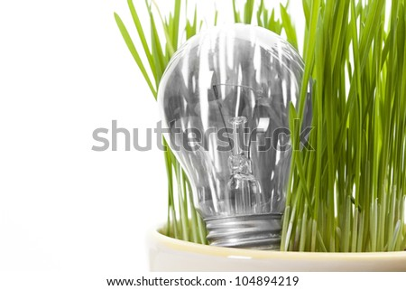 bulbs in the grass and care for the environment - stock photo