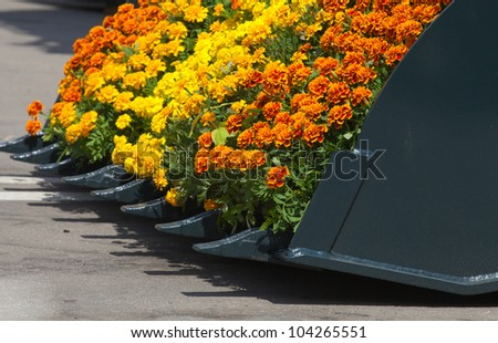 Buldozzer blade with flowers - stock photo