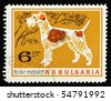 BULGARIA - CIRCA 1960: A stamp printed in Bulgaria showing Foxterrier, circa 1960 - stock photo