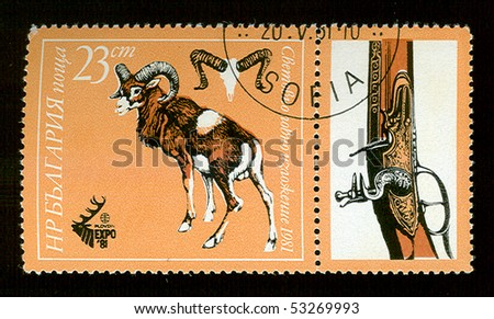 BULGARIA - CIRCA 1981: A stamp printed in Bulgaria showing ram, circa 1981