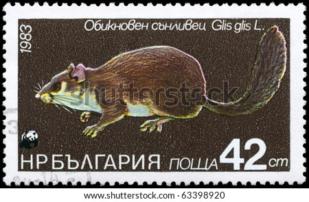 """BULGARIA - CIRCA 1983: A Stamp printed in BULGARIA shows image of a Dormouse with the description """"Glis glis"""" from the series """"Various bats and rodents"""", circa 1983 - stock photo"""