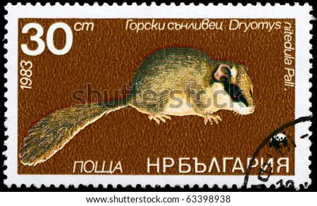 """BULGARIA - CIRCA 1983: A Stamp printed in BULGARIA shows image of a Forest Dormouse with the description """"Dryomys nitedula"""" from the series """"Various bats and rodents"""", circa 1983 - stock photo"""