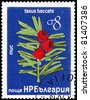 "BULGARIA - CIRCA 1976: A Stamp printed in BULGARIA shows image of a Yew with the description ""Taxus baccata"", series, circa 1976 - stock photo"