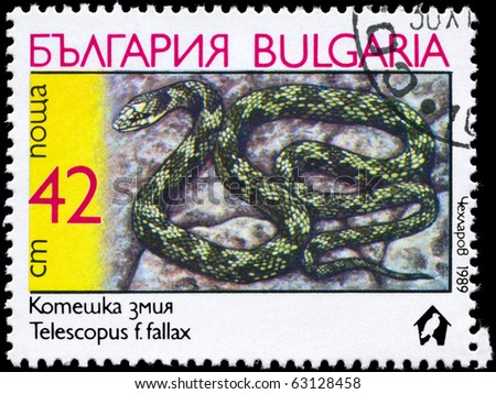 """BULGARIA - CIRCA 1989: A Stamp printed in BULGARIA shows the image of a Cat Snake with the description """"Telescopus fallax"""" from the series """"Snakes"""", circa 1989 - stock photo"""