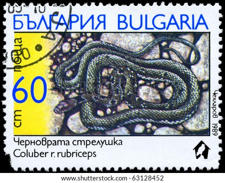 "BULGARIA - CIRCA 1989: A Stamp printed in BULGARIA shows the image of a Coluber with the description ""Coluber rubriceps"" from the series ""Snakes"", circa 1989 - stock photo"