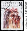 BULGARIA - CIRCA 1991: A stamp printed in Bulgaria shows Yorkshire terrier, circa 1991 - stock photo