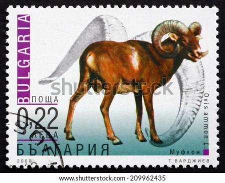 BULGARIA - CIRCA 2000: a stamp printed in the Bulgaria shows Mountain Sheep, Ovis Ammon, Wild Sheep, circa 2000 - stock photo