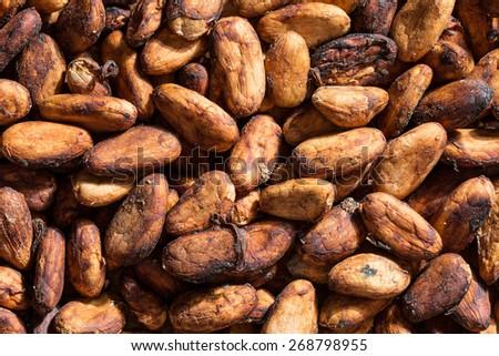 bulk cocoa beans closeup in Honduras - stock photo