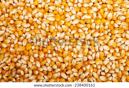 Bulk of yellow corn grains texture  - stock photo