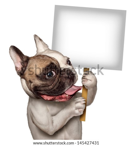 Bull Dog holding a blank white sign as a French Bulldog with a smiling happy expression supporting and communicating a message pertaining to pet products and animal care or veterinary services. - stock photo