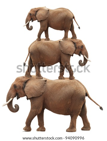 Bull elephant balancing act (photo composite). Isolated on white background - stock photo