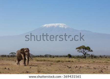 Bull Elephant with Kilimanjaro in background, Amboseli, Kenya