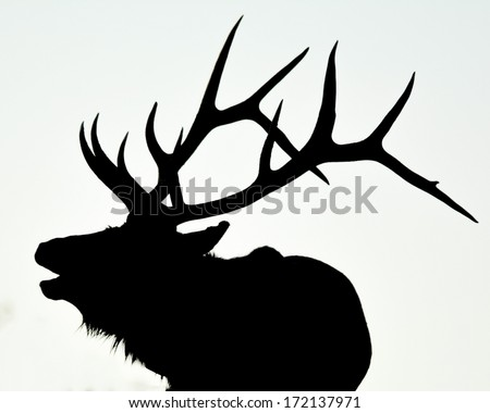 Elk Stock Photos, Royalty-Free Images & Vectors - Shutterstock