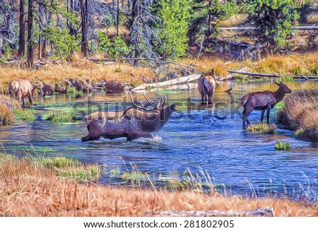 Bull elk with his harem in Yellowstone creek,photo art - stock photo