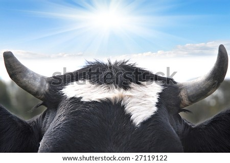 Bull horn close up - stock photo