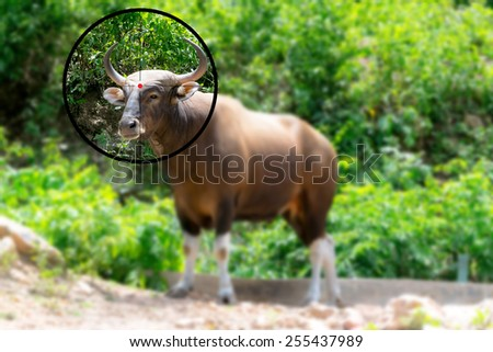 Bull in the shooting range - stock photo