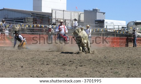 Bull on the Run - stock photo