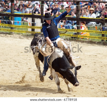 Bull Rider on Fresian Bull - stock photo