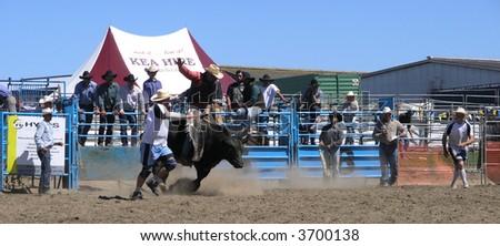 Bull Riding - stock photo