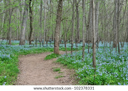 Bull Run Regional Park Trail, Fairfax County, VA at Bluebell Time Horizontal - stock photo