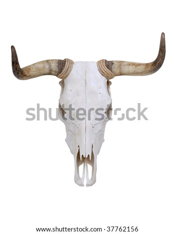 Bull skull with horns - stock photo
