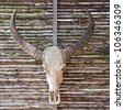 Bull skull with long horns  on  wood background. - stock photo