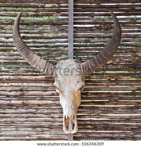 Bull skull with long horns  on  wood background. - stock photo