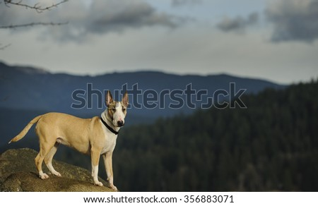 Bull Terrier posing on a rock with mountains and a cloudy sky