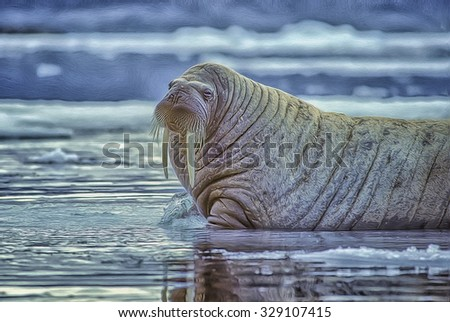 Bull walrus in Canadian High Arctic,digital oil painting - stock photo