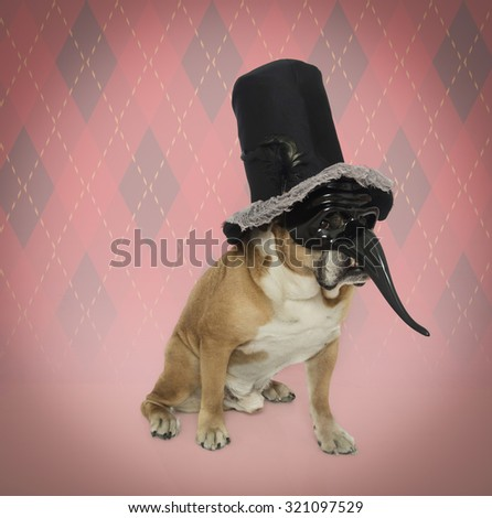 Bulldog dressed as a silly joker in a top hat and mask with a long skinny nose - stock photo