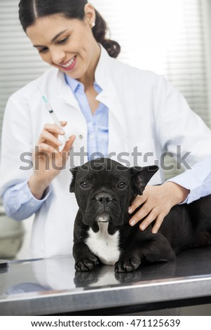 Bulldog Lying On Bed While Female Vet Holding Injection
