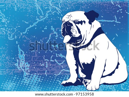 Bulldog on blue wall texture background. - stock photo
