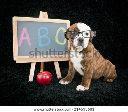 Bulldog puppy wearing glasses sitting next to a chalkboard ready to go back to school. - stock photo