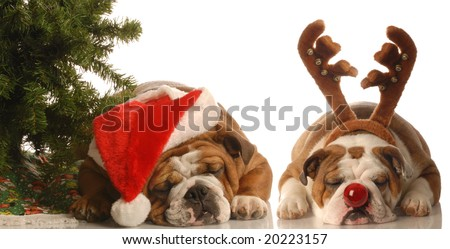 bulldog santa and bulldog rudolph under christmas tree - stock photo