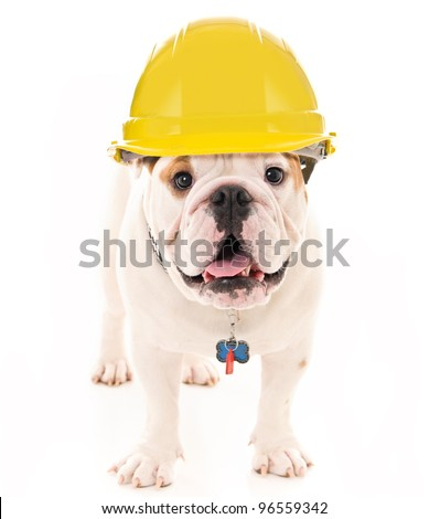 Bulldog Wearing a Yellow Construction Hard Hat - stock photo