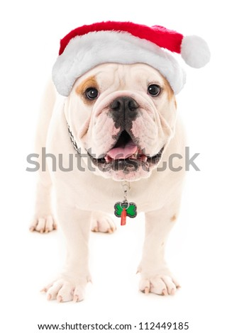 Bulldog with Santa Hat - stock photo