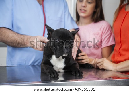 Bulldog With Vet And Family In Clinic