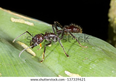 The Ants Go Marching  into Your Lesson Plans